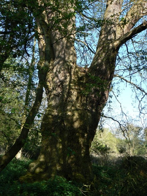 Hatfield Forest - Essex